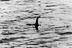 En voilà une question à laquelle bon nombre d'internautes souhaiteraient trouver une réponse! Car qui ne connait pas Nessie, le fameux monstre vivant dans le Loch Ness en Ecosse? Ces derniers mois ont été particulièrement riches en émotions pour ceux...