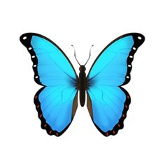 Most trending images, collections and artists right within PicsArt social network. Butterfly Clip Art, Morpho Butterfly, Butterfly Drawing, Blue Butterfly, Ios Emoji, Blue Emoji, Emoji Drawings, Emoji Clipart, Cute Emoji Wallpaper