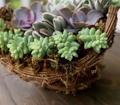 20 Top Most Populer Types of Succulents in the World - Single Voice Types Of Succulents, Growing Succulents, Succulents In Containers, Types Of Plants, Growing Plants, Planting Succulents, Succulent Plants, Zebra Plant, Jade Plants
