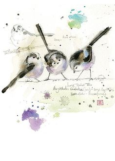 Long Tailed Tits by Jane Crowther. Design for Bug Art greeting cards. Watercolor Images, Watercolor Bird, Watercolor Animals, Watercolour Painting, Painting & Drawing, Watercolors, Art Carte, Art Aquarelle, Bug Art