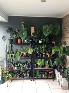 Room With Plants, House Plants Decor, Plant Decor, Plant Aesthetic, Aesthetic Rooms, Indoor Garden, Garden Plants, Home And Garden, Planting Succulents