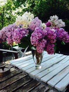 Ja, der Frühling ist endlich da! Wir freuen uns über die in der Sonne sprießende Natur und die schönen Farben der Blumen und Gräser. Ein schönes Wochenende allen, die sich auch darauf freuen, Zeit im Grünen zu verbringen! #frühling #frühlingsgefühle #deko #frühlingsdeko #sonne #blumen
