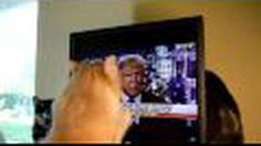 Cat does to Donald Trump what Clinton can only dream of doing