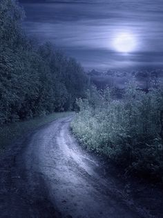 Moonlight road ~ artist Elena Dudina  #art #digital #mytumblr