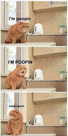 Cat false alarm pooping