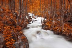 Autumn by Sinan Cansız on 500px