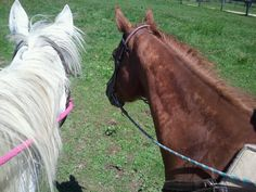My two ponies Cindy Lou Hou and Dreamer
