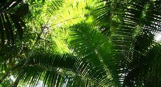Kew gardens palm canopy
