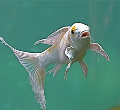 Goldfish | Flickr - Photo Sharing!