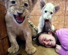 Kasper, right, a three-month-old white lion cub, plays with zookeeper Nadja Radovic's hair in the lion's enclosure at Belgrade Zoo, Serbia.