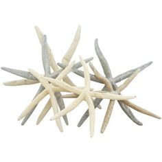 Starfish in Gray, Cream, and Tan - Set of 6 ($35) ❤ liked on Polyvore featuring home, home decor, beach, decorative objects, bone tray, stackable trays, gray home decor and grey home decor
