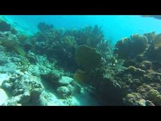 Delta Shoal, Marathon, FL Dive September 2014 - http://www.florida-scubadiving.com/florida-scuba-diving/delta-shoal-marathon-fl-dive-september-2014/
