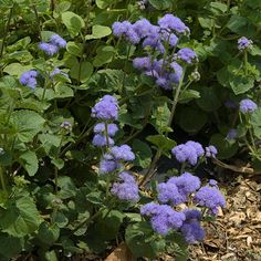 Landscape plants rated by deer resistance from the Rutgers New Jersey Agricultural Experiment Station Deer Resistant Garden, Deer Resistant Perennials, Types Of Hydrangeas, Types Of Plants, Outdoor Art, Outdoor Gardens, Outdoor Rooms, Outdoor Living, Landscaping Plants