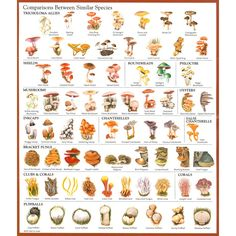 mushroom identification chart More