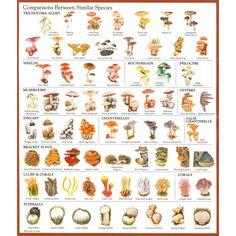 mushroom identification chart