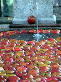 Apple bath - Free apples to sample, Emmental, Swizerland Vacation Trips, Vacations, Swiss Design, Wonders Of The World, Apples, Switzerland, Scenery, Bucket, Around The Worlds