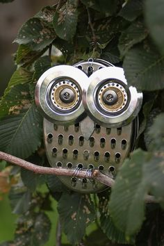 Creative, Grater Owl in the House Yard. Love this!!