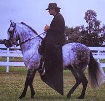 CABALLOS COLOMBIANOS: CABALLOS HISTORICOS DEL PASO FINO COLOMBIANO Horses, Animales, Horse
