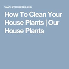 How To Clean Your House Plants | Our House Plants