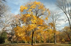 Fall Color, New York City, Autumn, Photo