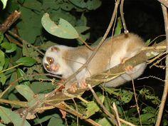 Nambor Wildlife Sanctuary in Assam, India