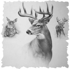 Pencil Drawings Of Whitetail Deer White-Tailed Deer Clipart Pencil Animal Drawings, Pencil Drawings, Art Drawings, Deer Art, Moose Art, Deer Sketch, Deer Drawing, Deer Tattoo, Tier Fotos