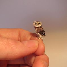 #owl #littleowl #miniature #dollhouseminiatures #miniatureart