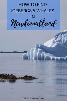 Tips on finding icebergs, whales, and other natural wonders in Newfoundland, Canada! One of the best things to do in Newfoundland on your Canada travels These sites shouldn't be missed on your trip. Newfoundland Icebergs, Newfoundland And Labrador, Newfoundland Canada, East Coast Travel, Christmas In Europe, Whale Watching, Canada Travel, Travel Guides, Travel Tips