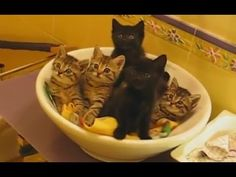 """Cats Playing in Sinks Compilation"" 