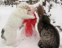 Cats enjoying winter