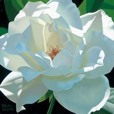 """Brian Davis """"Rose in Shadows"""" is a signed numbered limited edition canvas from floral artist Brian Davis Plant Drawing, Painting & Drawing, Art Hyperréaliste, Watercolor Flowers, Watercolor Paintings, Watercolors, Floral Paintings, Brian Davis, Illustration Photo"""