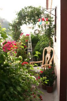 Balcony Garden on Pinterest | Balconies, Clematis Trellis and Dubai