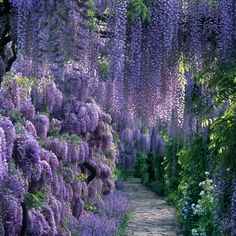 Plant your own garden oasis - i love wisteria! i could just lay under a wisteria tree for the rest of my life. Backyard Retreat, Backyard Pergola, Backyard Landscaping, Pergola Kits, Landscaping Ideas, Natural Landscaping, Pergola Roof, Pergola Ideas, Wisteria Sinensis