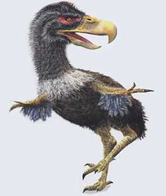 Titanis | illustration de titanis l encyclopedie des dinosaures gallimard 2002, one of the last Terror Birds.