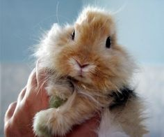 Bunny:), animal, bunny, cute