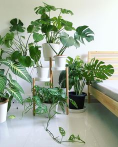 Monstera Monday pic photobombed by a naughty pot of Can you spot the big-leafed - greenvertluk House Plants Decor, Plant Decor, Plant Aesthetic, Diy Plant Stand, Office Plants, Bedroom Plants, Interior Plants, Kitchen Interior, Interior Design