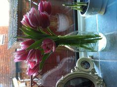 Tulips in an old milk bottle as a vase