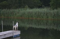Lily on the dock of the pond at the Jouppi Farm