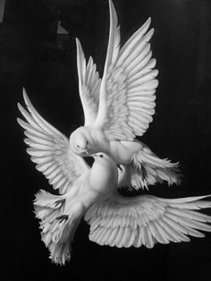 Spiritual teachings - including Buddhist, Christian and other nature animals dogs horses world, Christian and classical music poetry humor photography Colombe Tattoo, Renaissance Kunst, Dove Tattoos, Dove Bird, White Doves, Classical Art, Nature Animals, Bird Art, Aesthetic Art