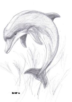 Animal Drawings Images For > Pencil Drawings Of Dolphins Art Drawings Sketches Simple, Pencil Art Drawings, Realistic Drawings, Easy Drawings, Simple Animal Drawings, Pencil Sketches Of Animals, Drawing Ideas, Animal Sketches Easy, Pencil Drawing Tutorials