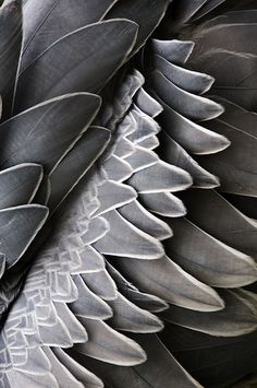 Grey Feathers - organic textures; monochromatic patterns in nature