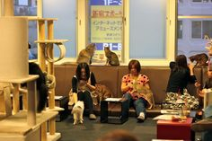 What is it Cat Cafe? Lots of cats in a cafe and you can have your drink or something to eat with a cat on your lap. Also there is a bookshelf there. Take a book Pet Cafe, Cat Playpen, Japan Cat, Maid Outfit, Lots Of Cats, Tokyo Travel, Ways To Relax, Weird And Wonderful, Best Memories