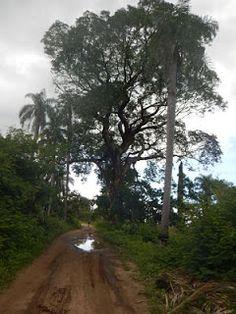 II Desafio 50 K da Chapada do Araripe, uma ultramaratona realizada na Chapada do Araripe. Essa prova considerada como trail run cruza a cidade de Barbalha, no Ceará, e possui muitas subidas, principalmente, na segunda metade da corrida.