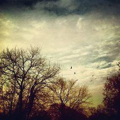 Photo by kiwiboy