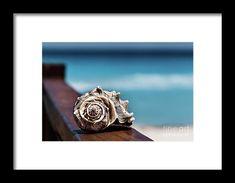 Echoes by Evgeniya Lystsova   Sea shell with sea as background in Cancun, Mexico, vacation concept #EvgeniyaLystsovaFineArtPhotography #Landscape #Ocean #Sea #Shell #Beach #Coastal #Vacation #Travel #Photography #FineArtPrints #HomeDecor #InteriorDesign #WallArt #FramedPrints #ArtDecor