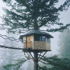 A Beautiful Tree House  #TreeHouse #Tree #Green #InstaGreen #Green #Nature…