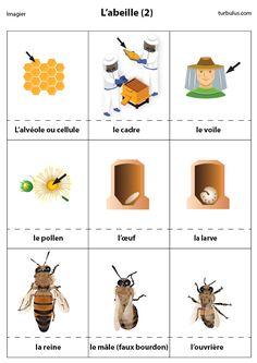 Fiche pédagogique sur la vie des abeilles : l'alvéole, le cadre, le voile, le pollen, l'œuf, la larve, la reine, le faux-bourdon et l'ouvrière.