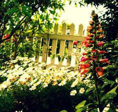 The Syders: The Foxglove