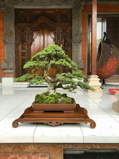 ✿⊱❣♥ BEAUTIFUL BONSAI ✿⊱❣♥