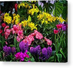 Thing 1, Flowers For You, Acrylic Sheets, Got Print, Any Images, Landscape Photos, Wonderful Images, Nature Photos, Clear Acrylic